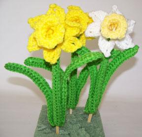 daffodil yard picks