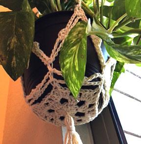 thumbnail_holding-plant